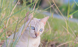 House cat ( shallow depth of field) in the mist of plants Stock Image