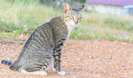House cat ( shallow depth of field) sitting on the sand Royalty Free Stock Images