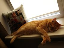 House cat sleeping. Red cat. Details and close-up royalty free stock image