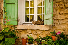 House Cat on Window Sill. Housecat Resting Comfortably on Outside Window Sill With Green Wooden Window Shutters and Potted Plants royalty free stock images
