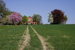 House with cherry blossom in April, Germany Royalty Free Stock Photography