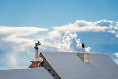House Chimney, winterday Stock Image