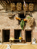 House with corn cobs hanged to dry in Nepal Stock Images