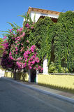 House covered with bougainvillea Royalty Free Stock Photography