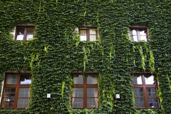 House covered with green leaves. In Munich, Germany Stock Photography