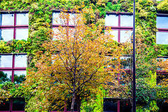 House covered by green plants Stock Images