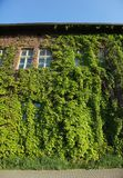 House Covered In Ivy Royalty Free Stock Photography