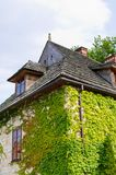 House covered by ivy Royalty Free Stock Image