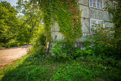 House covered with ivy. Royalty Free Stock Photography
