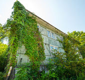 House covered with ivy. Stock Image