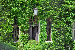 House covered with leaves Royalty Free Stock Photo