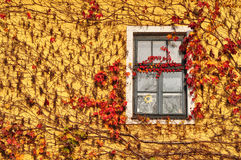House covered by leves in autumn Royalty Free Stock Photo