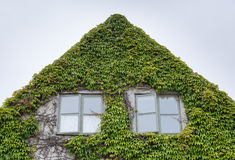 House Covered in Vegitation. House Covered in Vegetation with a pair of windows Royalty Free Stock Image