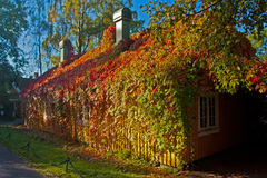 House covered with Virginia Creeper Royalty Free Stock Photography