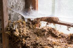 House in decay - Rotten interior Royalty Free Stock Image