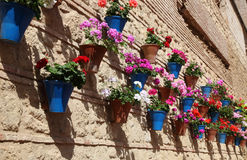 House decorated with flowerpots Stock Images