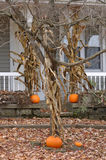 House decorated with pumpkins Stock Image