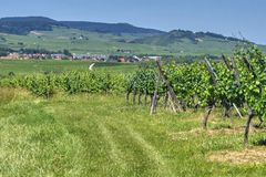 Alsatian hilly landscape. View of a green summer vineyard and the Alsatian village on the horizon stock photo
