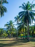 House deep in the palm grove. Koh Phangan Thailand royalty free stock images