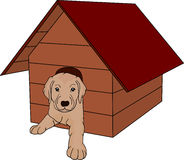 House dog Stock Photography