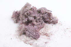 House dust Stock Photography