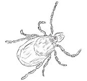 House dust mite. Allergy. Vector illustration done in manual mode Royalty Free Stock Photo