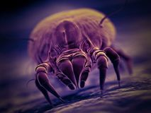 A house dust mite. 3d rendered illustration of a house dust mite stock illustration