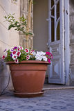 House entrance. A view to an house entrance decorated with a large flowerpot Royalty Free Stock Images