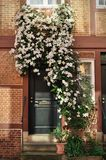 House entrance covered in flowers. Portrait view of a front door entrance of a terraced house in Hamburg, grown over by white flowers Stock Image
