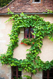 House facade with climbing grapes in France Stock Image