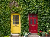 Facade with ivy and two doors in yellow and red royalty free stock image
