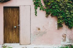House facade ivy on the wall. House facade ivy on the painted wall stock images