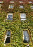 House facade under red green leaves Stock Photos