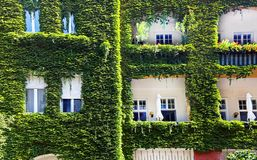 House facade with windows and balconies overgrown with wild grapes, Bratislava, Slovakia