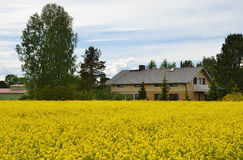 Country house and meadow with yellow plants Royalty Free Stock Images