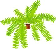 House ferny plant Royalty Free Stock Photo