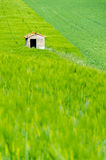 House in the field Stock Photography