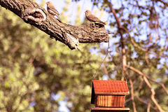 2 house finches. Two house finches on tree limb Stock Photos