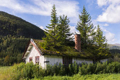 House with fir trees on roof Royalty Free Stock Photo