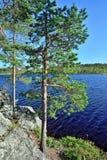 house floden för republiken karelia för den karelian liggandenaturen den norr Pongoma flod, norr Karelia, Ryssland Fotografering för Bildbyråer