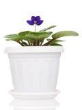 House flower Stock Photos