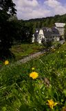 House with flowerbeds. A dandelion in bloom on a hillside in front of a house with flowerbeds stock images