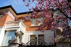 House with flowering tree in Padua in the Veneto (Italy) Royalty Free Stock Image