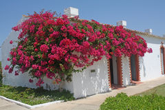 House and flowers. Royalty Free Stock Images