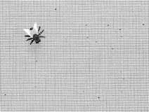 House fly. Single fly on a window screen Stock Photography