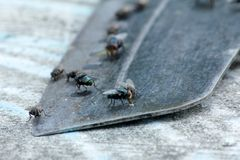 House fly, food contamination hygiene concept. The flies are insect carriers of cholera. Living on kitchen accessories, fruits, vegetables and food scraps. To Royalty Free Stock Image