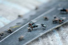 House fly, food contamination hygiene concept. The flies are insect carriers of cholera. Living on kitchen accessories, fruits, vegetables and food scraps. To Stock Image