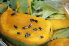 House fly, food contamination hygiene concept. The flies are insect carriers of cholera. Living on kitchen accessories, fruits, vegetables and food scraps. To Stock Photos