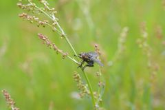 House fly in grass Stock Photos