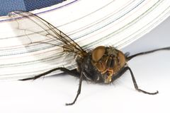 House fly killed by magazine Stock Photography